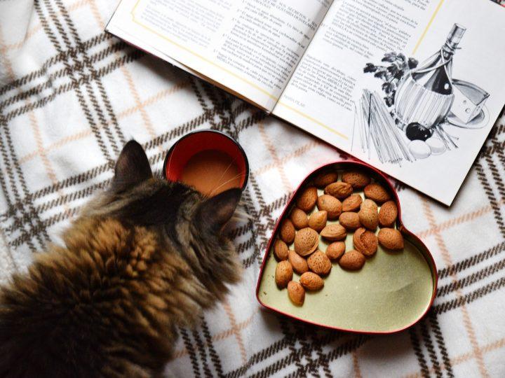 Sinds ik intuïtief leer eten, denk ik de hele dag aan eten! Help?!